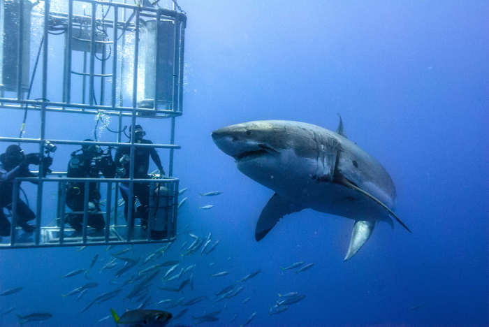 shark diving cage