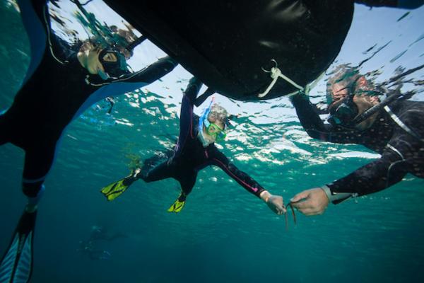 Sortie Snorkeling dans les calanques