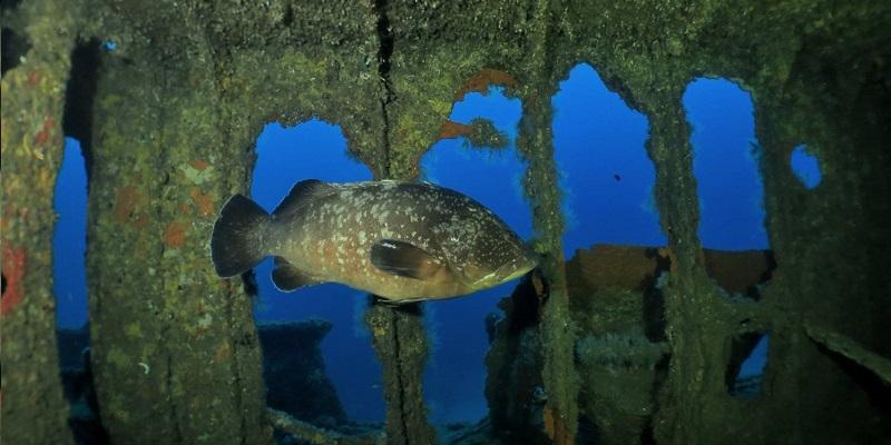 Dive wreck advance diver corsica