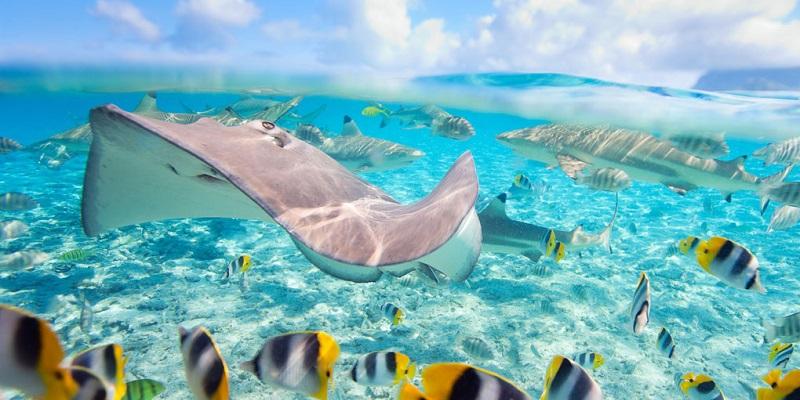 PLonger en Polynesie Francaise sur le site Aquarium