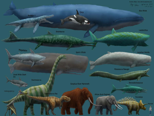 The blue whale, the largest whale in the world