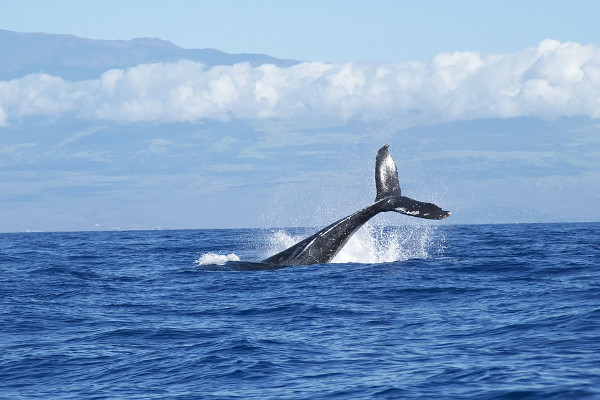 whale jump