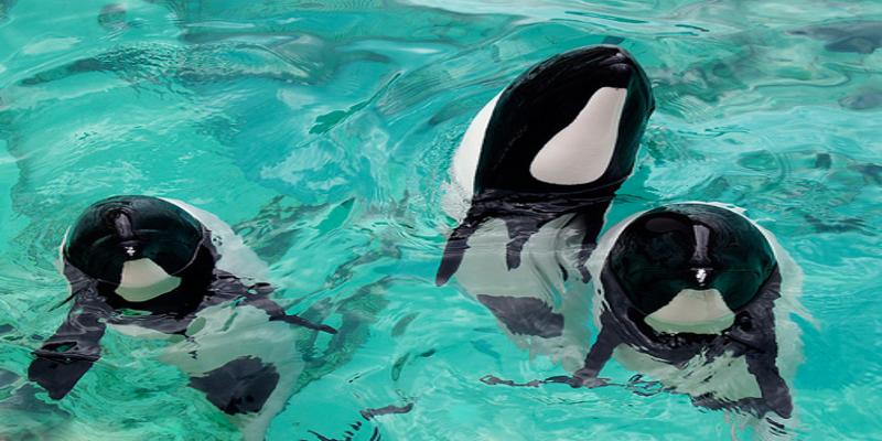 panda dolphin