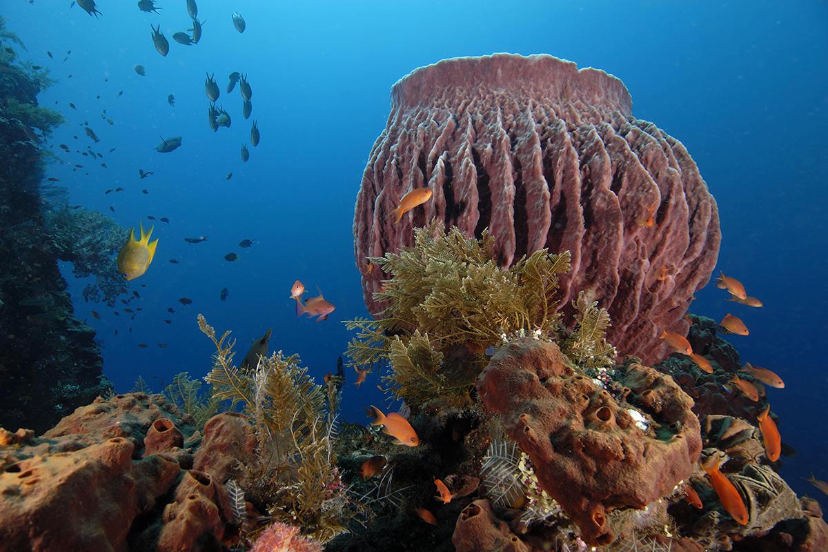 coral reef bali