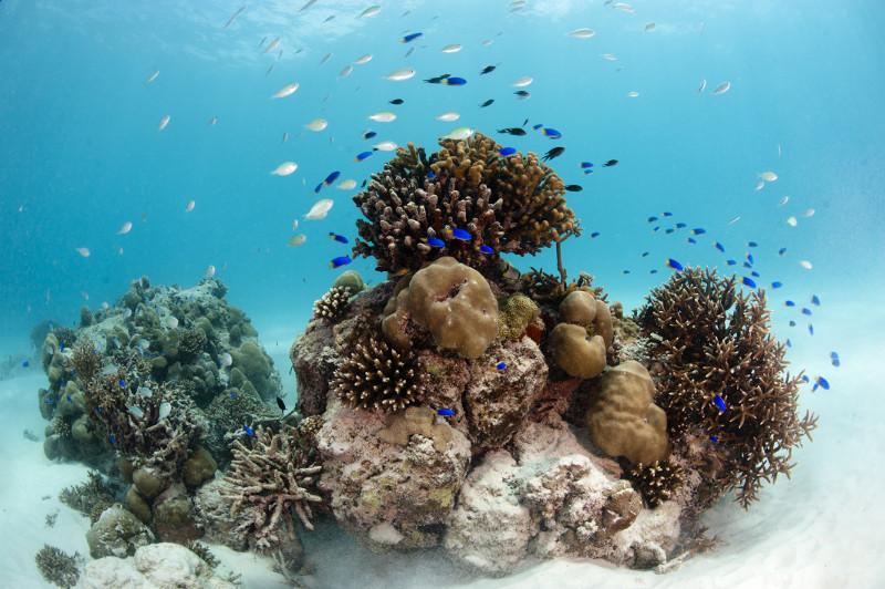 seychelles plongée