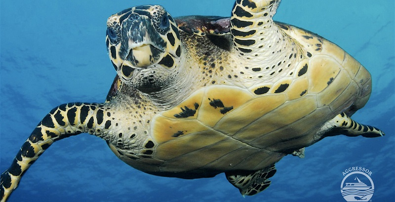 Diving in the cocos islands