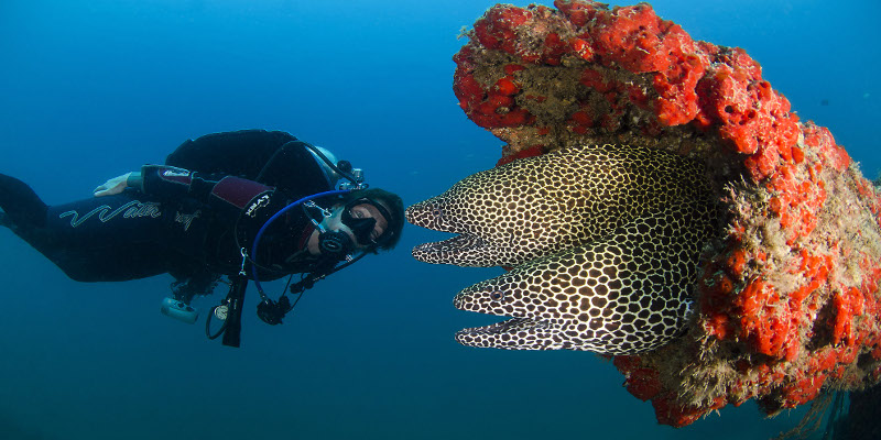 honeycomb moray eel in Zanzibar
