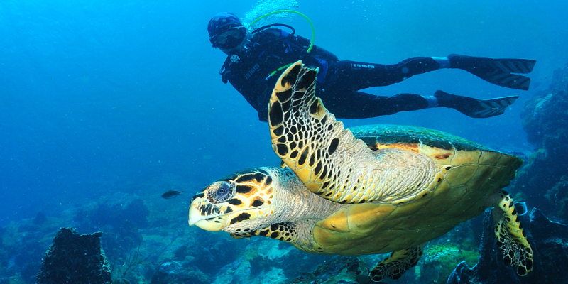 tortue sous marine