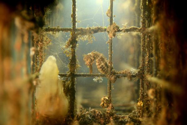 récifs artificiels ecocean