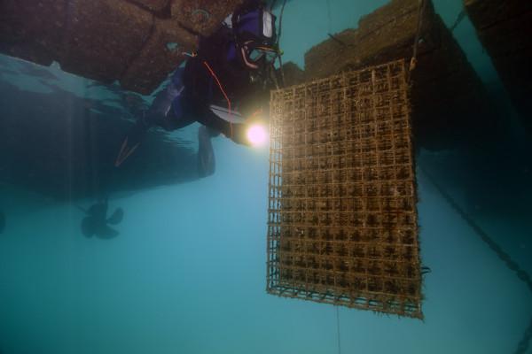 récifs artificiels biohut