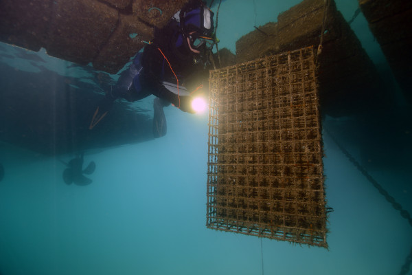 arrecife artificial biohut