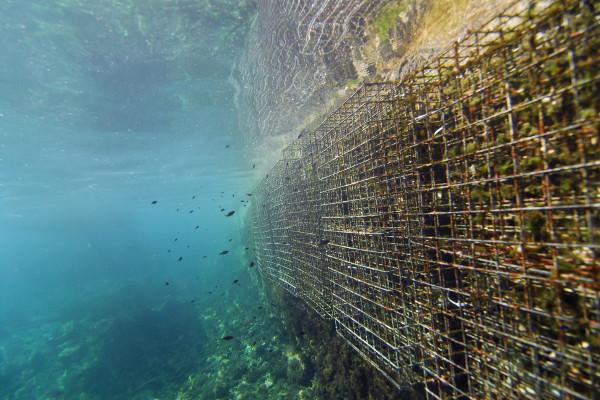 artifical reefs biohut