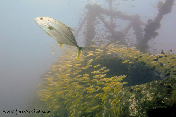 nosy be wreck diving
