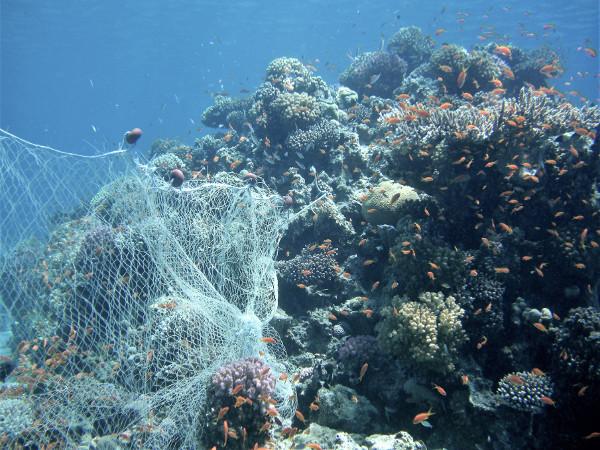 a ghost net