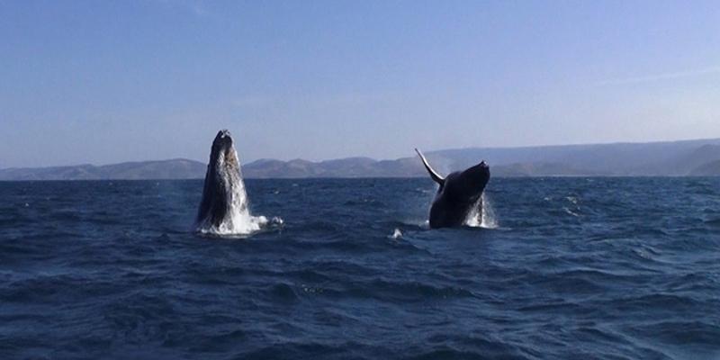 snorkeling baleine afrique du sud