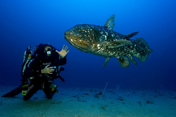 coelacanth alive
