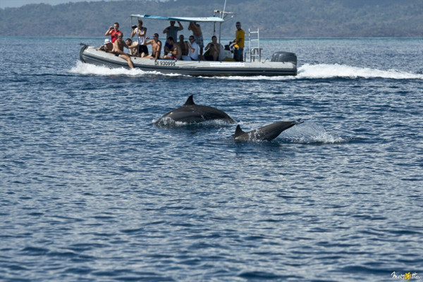 dolphin mayotte