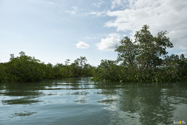 mangrove in mayotte