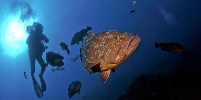Diving site merouville corse france plongeur