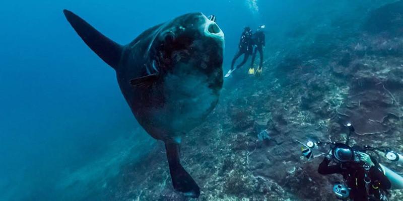 poisson lune bali