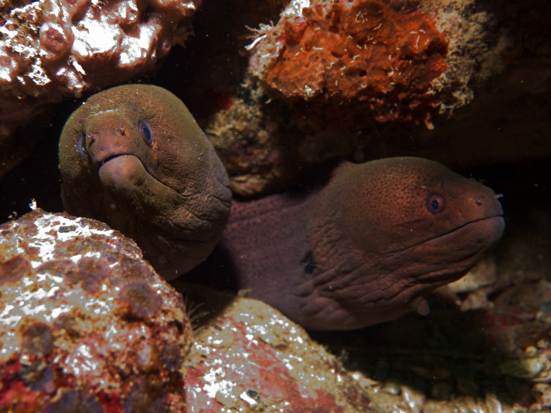 group moray eel