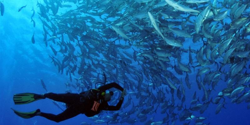 Plonger à Bora Bora Polynesie
