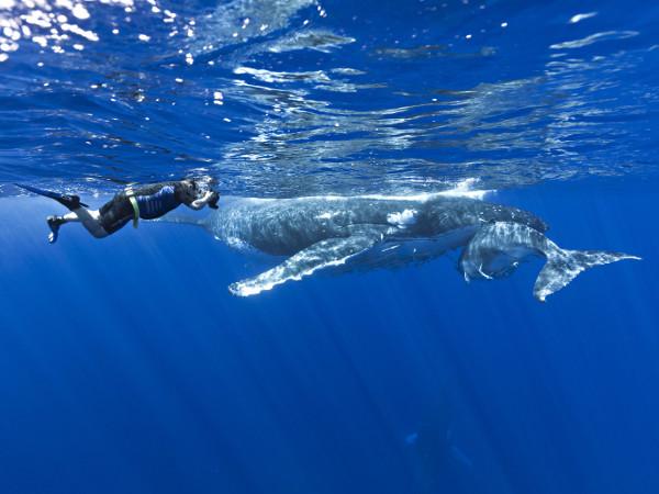 nager baleines