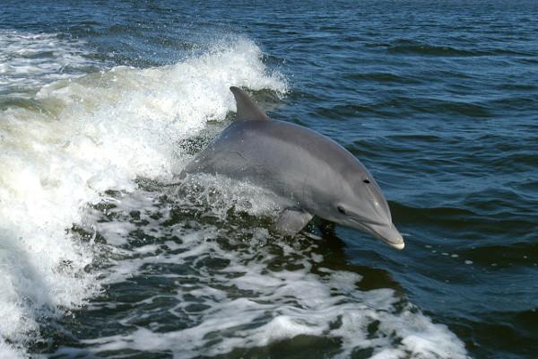 delfines bahamas