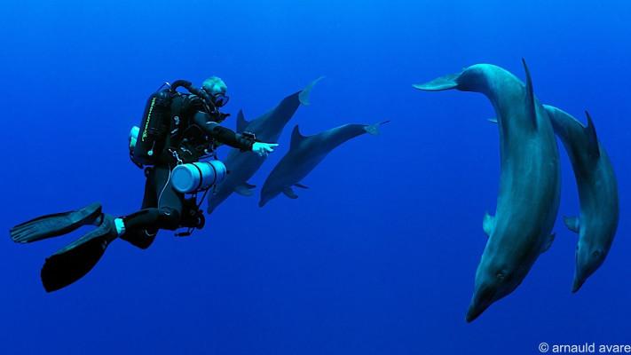 dauphins polynésie
