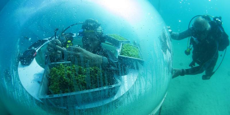 jardin aquatique avec la ferme de Nemo