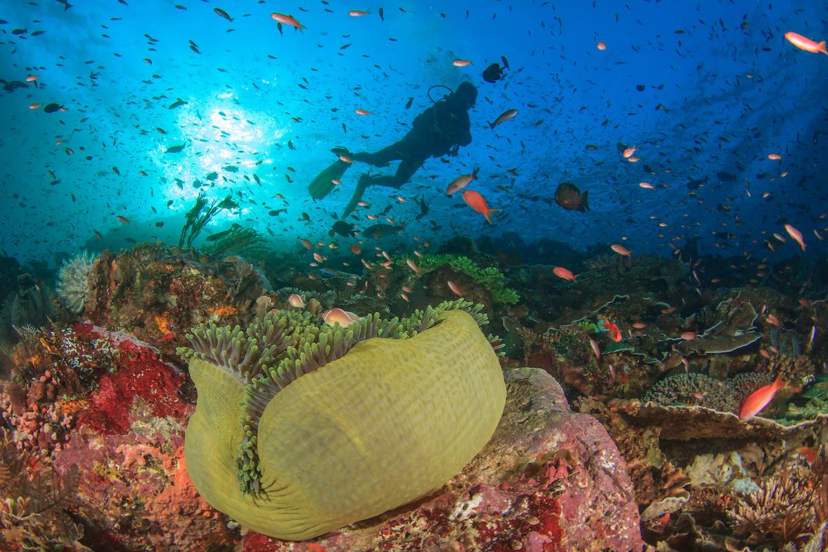 ningaloo arrecife