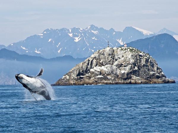 baleine alaska