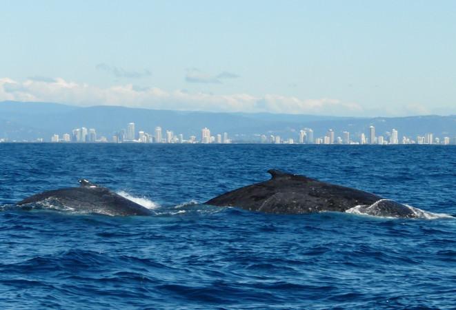 baleine australie