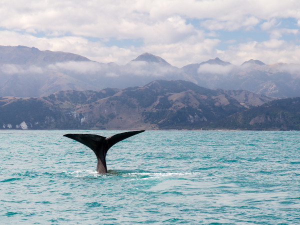 whales new zealand