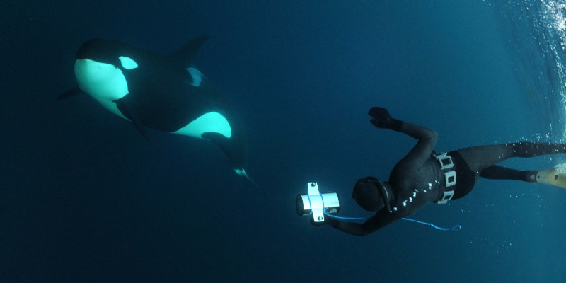 dive with orcas in Norway