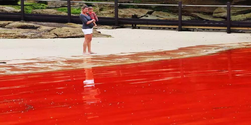 Marées rouges
