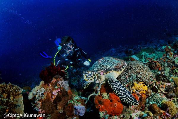tortue en plongée bali