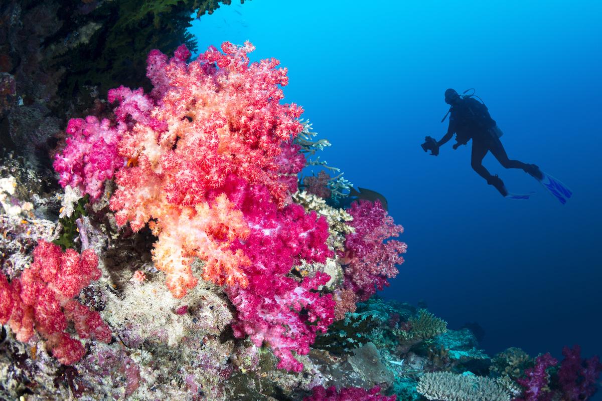 plongeur récif coralien