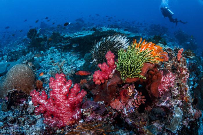 corales komodo