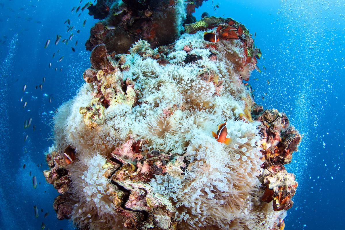 diving in palau in november