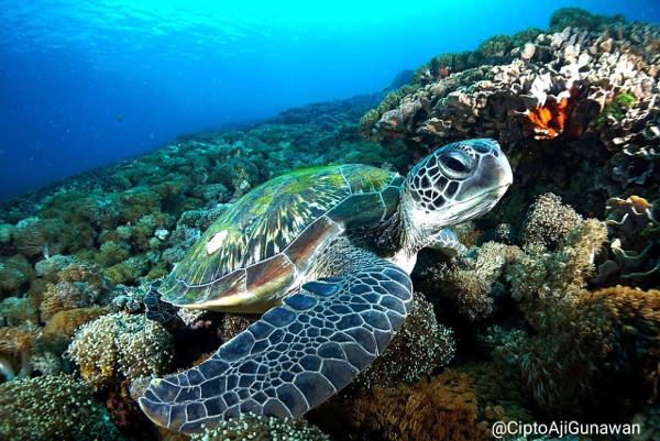 marine turtle komodo