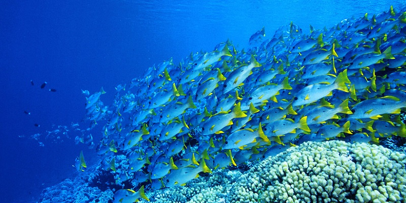 Plonger sur la passe de Bora Bora
