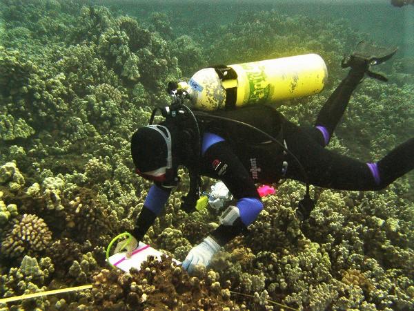 scientist diver