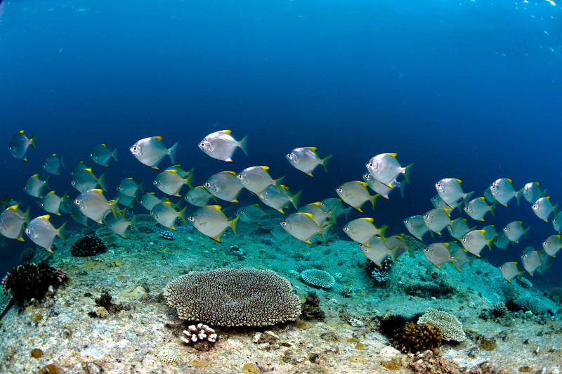 poisson seychelles