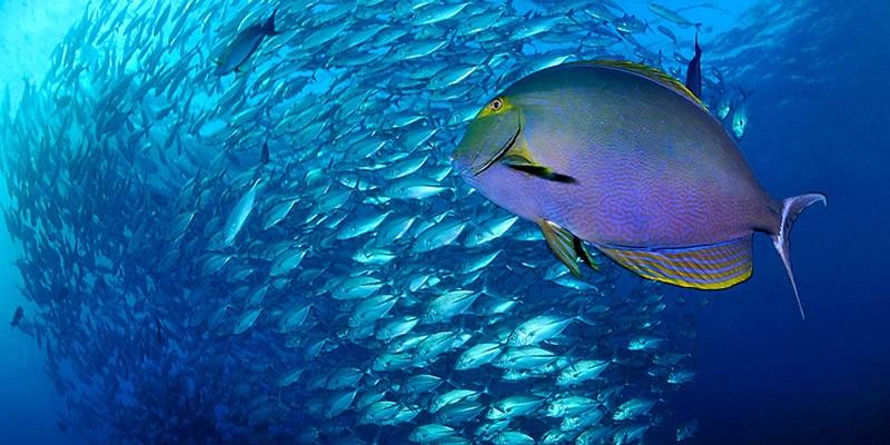 spot de plongée sous-marine Polynésie française