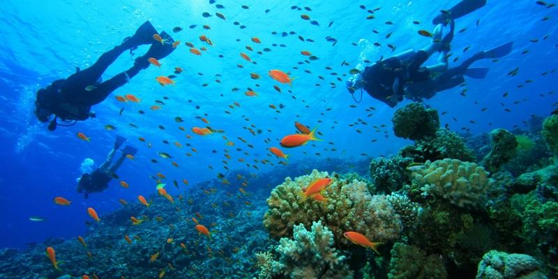 dive site Pointe Locca diver