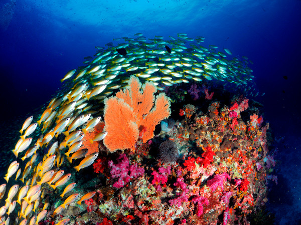 coral reef thailand