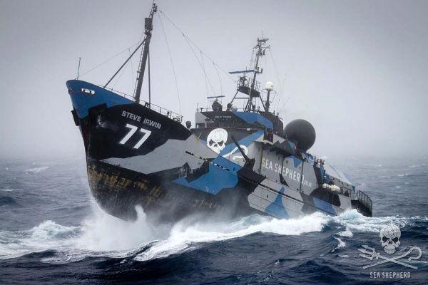 bateau sea shepherd