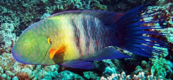 Safaga Fish Egypt