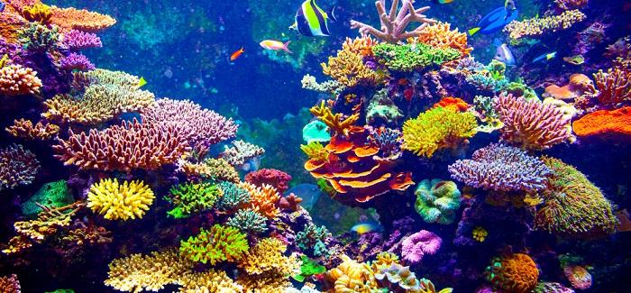 Corales Egipto